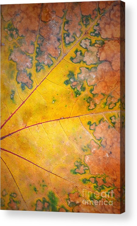 Leaf Acrylic Print featuring the photograph Autumn Leaf Abstract by Tara Turner