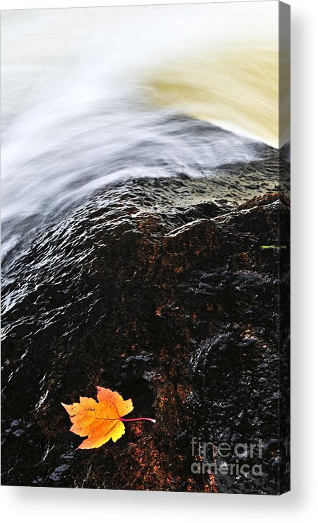 River Acrylic Print featuring the photograph Autumn Leaf On River Rock by Elena Elisseeva