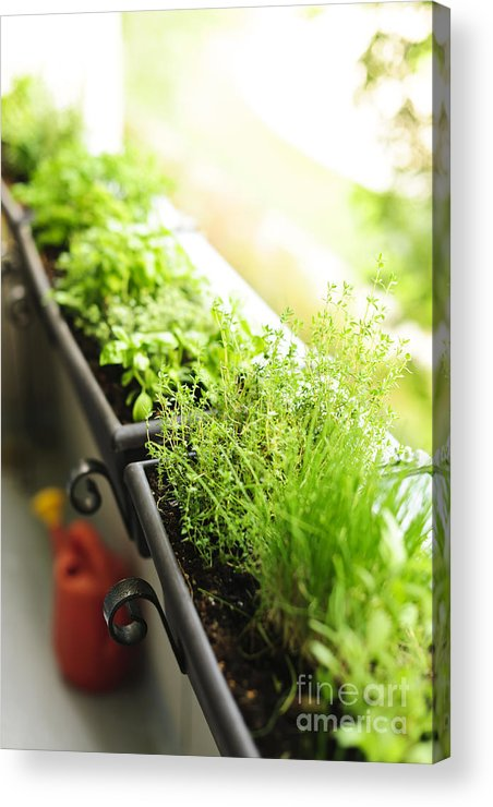 Herbs Acrylic Print featuring the photograph Balcony Herb Garden by Elena Elisseeva