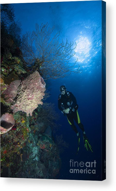 Diver Acrylic Print featuring the photograph Barrel Sponge And Diver, Belize by Todd Winner