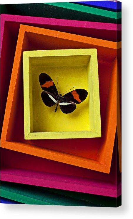 Butterfly Acrylic Print featuring the photograph Butterfly In Box by Garry Gay