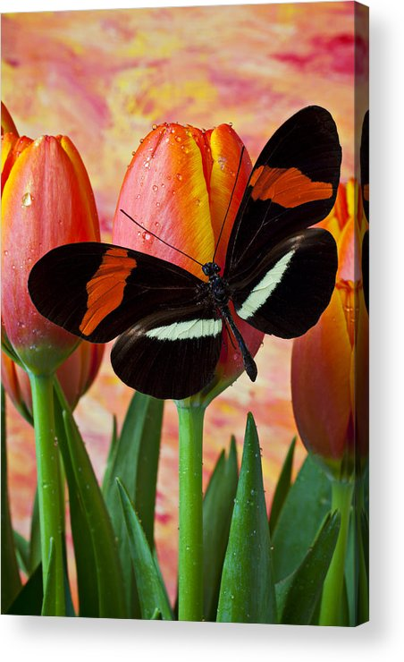 Butterfly Acrylic Print featuring the photograph Butterfly On Orange Tulip by Garry Gay