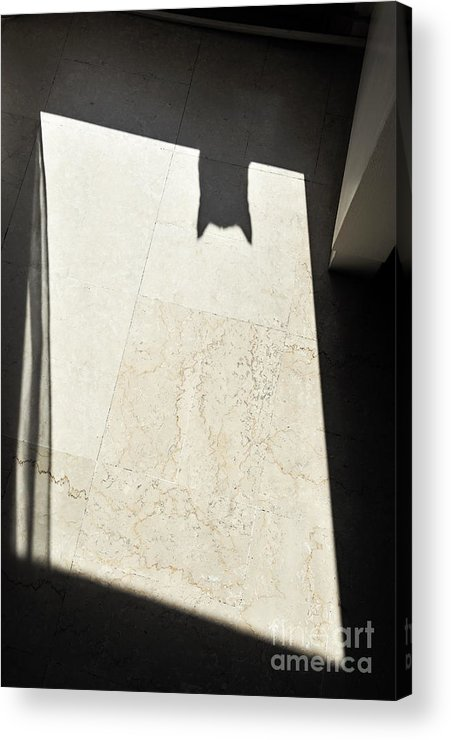 Mystery Acrylic Print featuring the photograph Cat's Shadow by Sami Sarkis