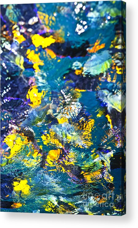 Fish Acrylic Print featuring the photograph Colorful Tropical Fish by Elena Elisseeva