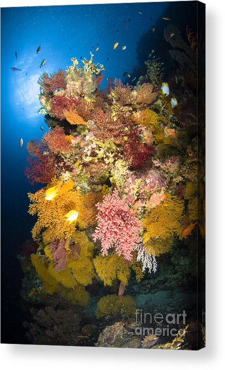 Sea Life Acrylic Print featuring the photograph Coral Reef Seascape, Australia by Todd Winner