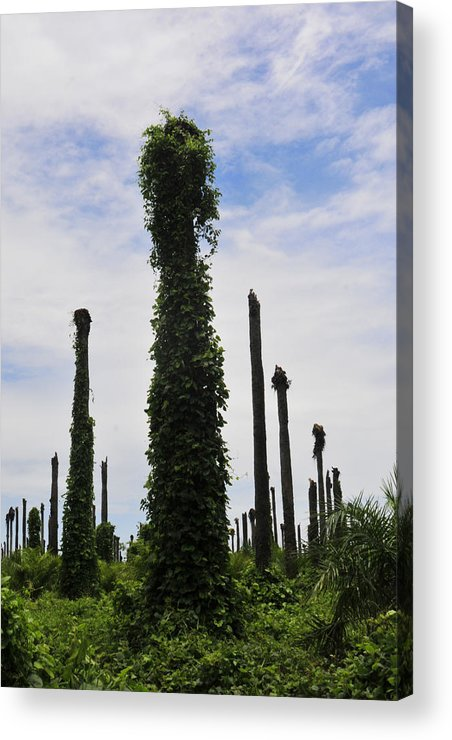 Palm Trees Acrylic Print featuring the photograph Dead Palm Graveyard by Rianna Stackhouse