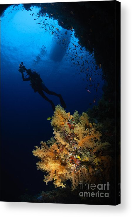 Diver Acrylic Print featuring the photograph Diver And Soft Coral, Fiji by Todd Winner