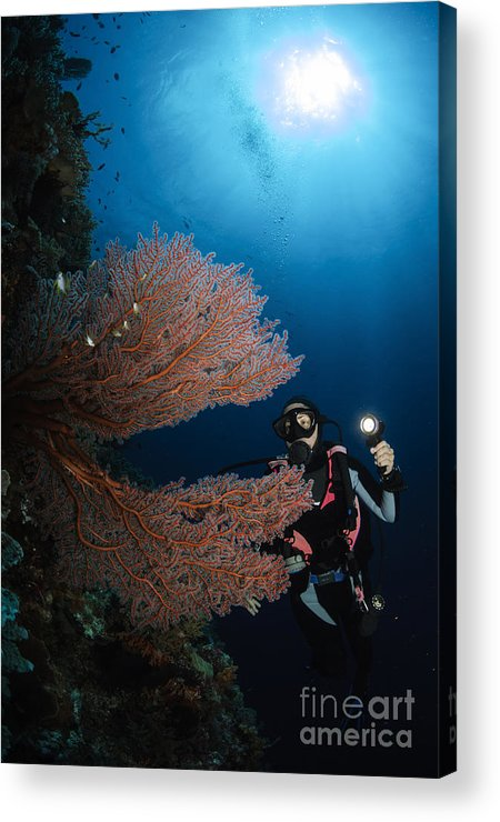 Diver Acrylic Print featuring the photograph Diver By Sea Fans, Indonesia by Todd Winner