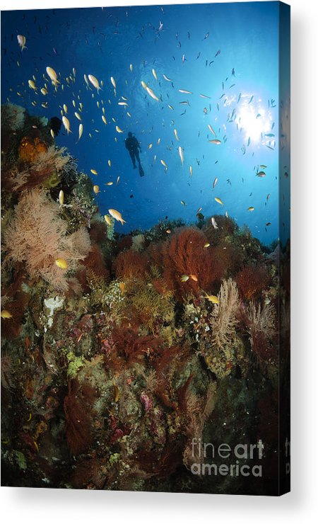 Diver Acrylic Print featuring the photograph Diver Over Reef Seascape, Indonesia by Todd Winner