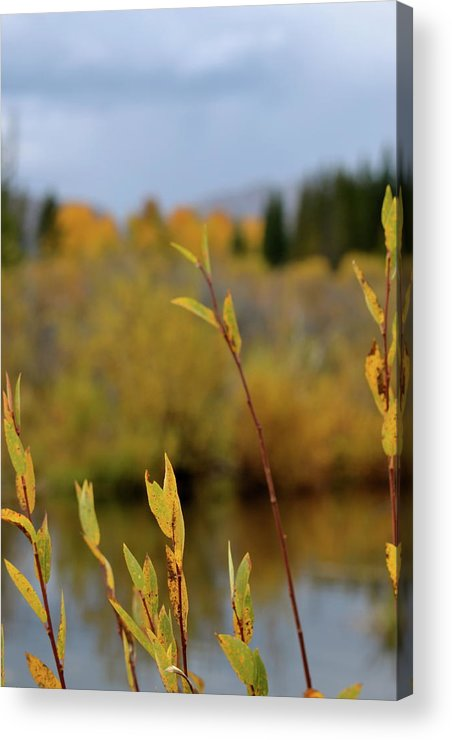 Autumn Acrylic Print featuring the photograph By The River by Beverley Harper Tinsley