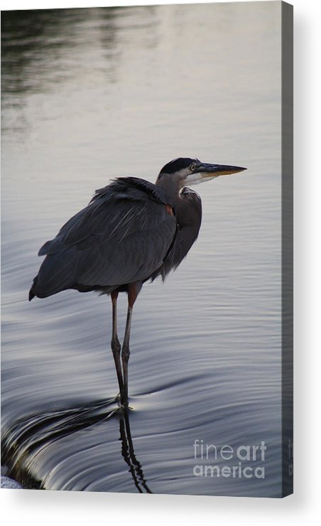 Water Acrylic Print featuring the photograph Dreamy2 by Dominique Jorgensen