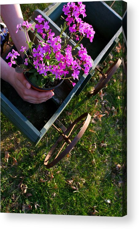 Flowers Acrylic Print featuring the photograph Early Spring Treasure by Susan Elise Shiebler