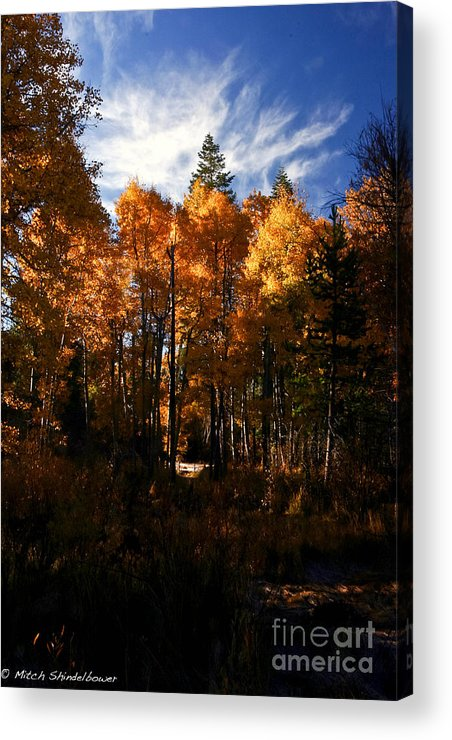 Taylor Creek Acrylic Print featuring the photograph Fall Colors Taylor Creek. by Mitch Shindelbower