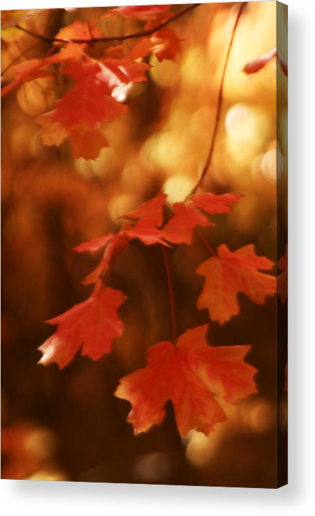 Fall Acrylic Print featuring the photograph Falling Into Autumn by Faith Gauthier