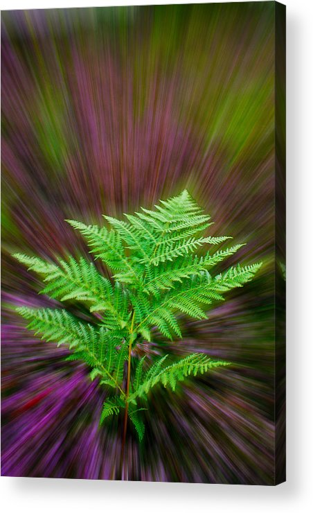 Fern Acrylic Print featuring the photograph Fern Zoom by Alice Gosling