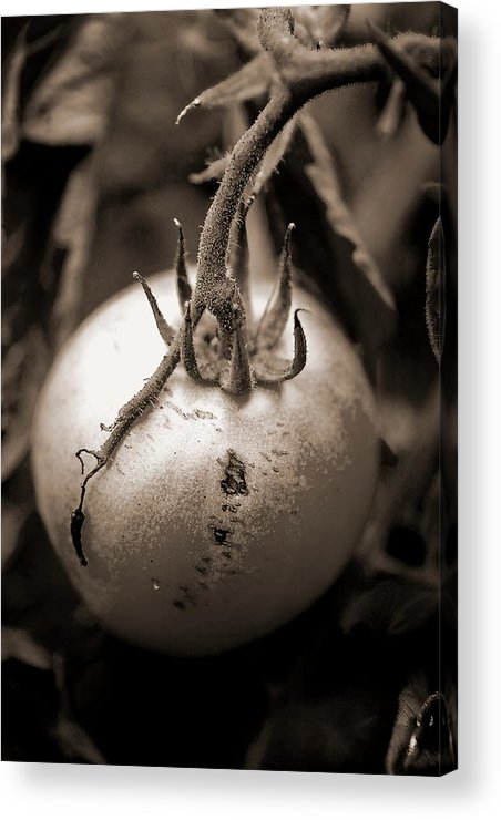 Tomatoe Acrylic Print featuring the photograph Flower 5 by Burney Lieberman