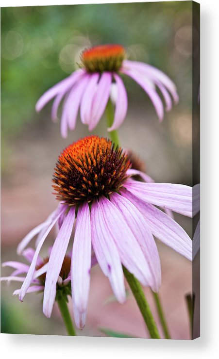 Vertical Acrylic Print featuring the photograph Flowers by invisibleA