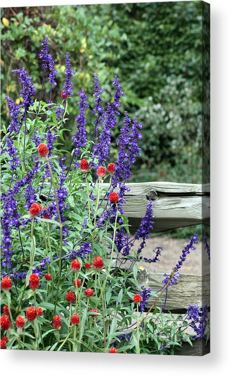 Flower Acrylic Print featuring the photograph Garden Fence by Lauren Nicholson