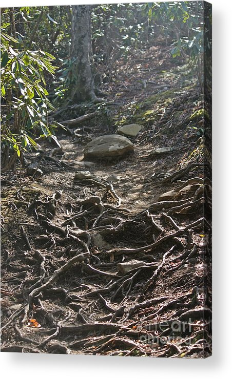 Acrylic Print featuring the photograph Grandfather's Trail by Bev Veals