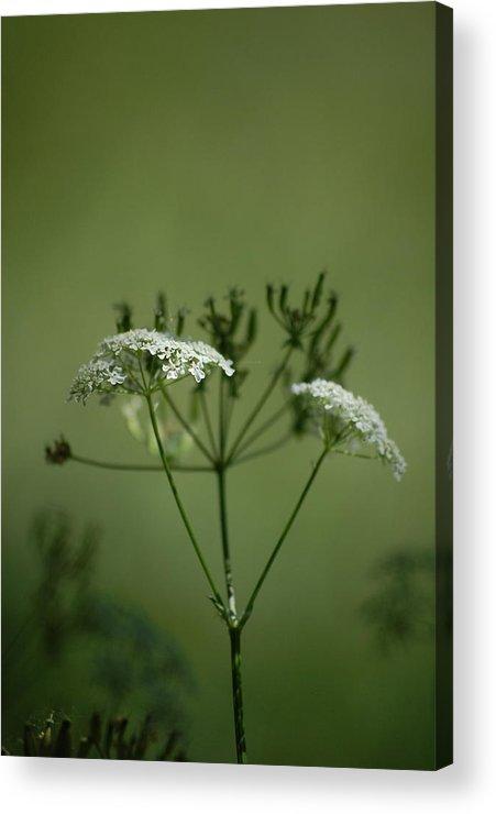Dickon Acrylic Print featuring the photograph Green Garden by Dickon Thompson