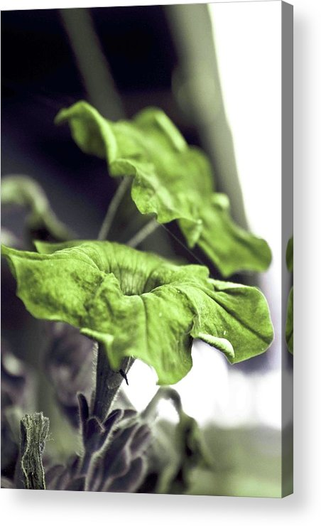 Flower Acrylic Print featuring the photograph Growth by Dax Ian