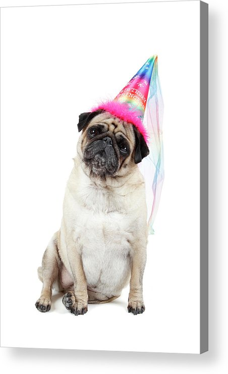 Vertical Acrylic Print featuring the photograph Happy Birthday by Mlorenzphotography