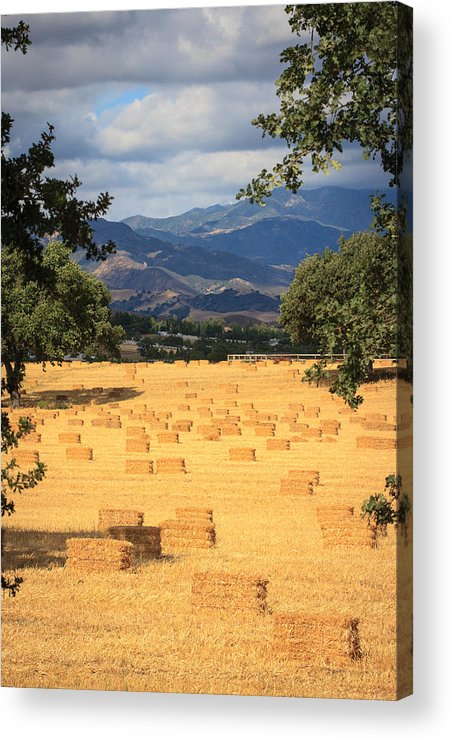 Santa Ynez Acrylic Print featuring the photograph Hay Field With Mountain Background by Dina Calvarese