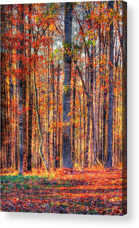 Autumn Acrylic Print featuring the photograph Hdr- Autumn Leaves by Joe Myeress