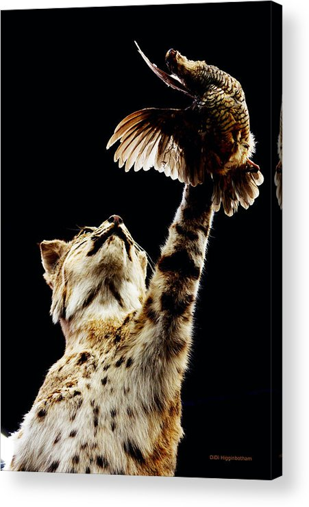 Bobcat Acrylic Print featuring the photograph He Got Away by DiDi Higginbotham