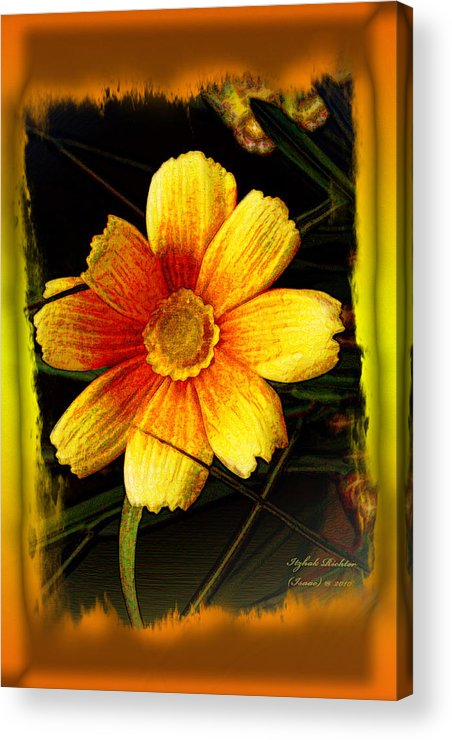 Flower Acrylic Print featuring the photograph I Have My Eye On You by Itzhak Richter