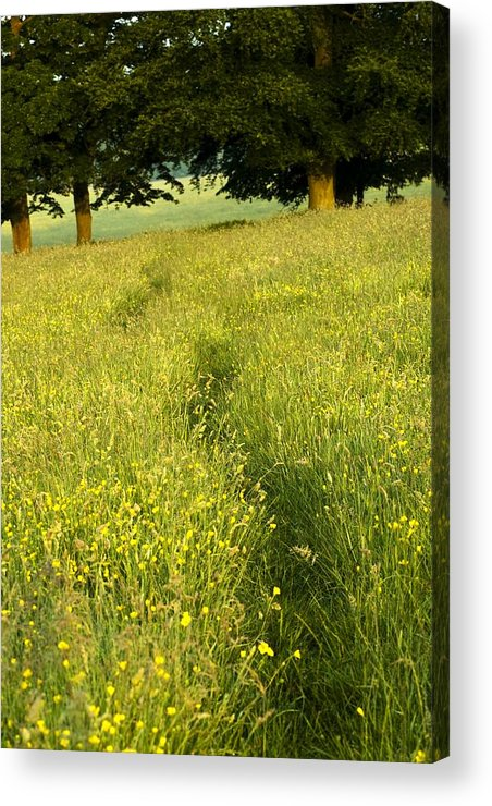 Day Acrylic Print featuring the photograph Ireland Trail Through Buttercup Meadow by Peter McCabe