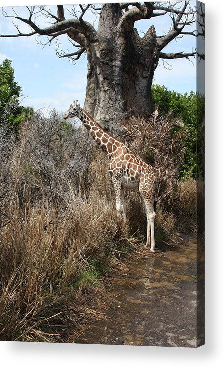 Acrylic Print featuring the photograph Jungle by Jorge Chavez