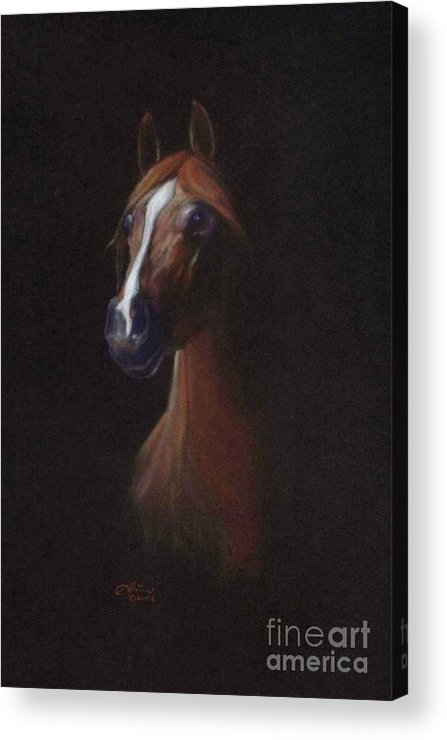 Equestrian Acrylic Print featuring the pastel Keturous by Tonia Antilla