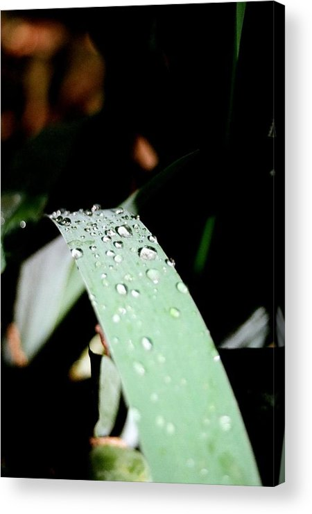 Rain Drops Acrylic Print featuring the photograph Little Drops by Brian Roberts