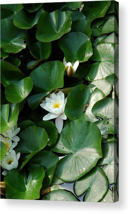 Usa Acrylic Print featuring the photograph Lotus by LeeAnn McLaneGoetz McLaneGoetzStudioLLCcom