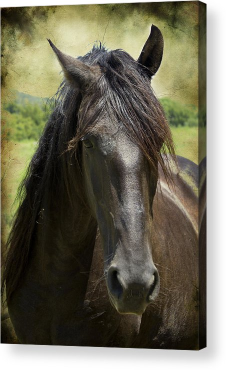 Horses Acrylic Print featuring the photograph Majestic by Elizabeth Wilson
