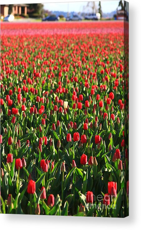 Flower Acrylic Print featuring the photograph Minority by Angela Q