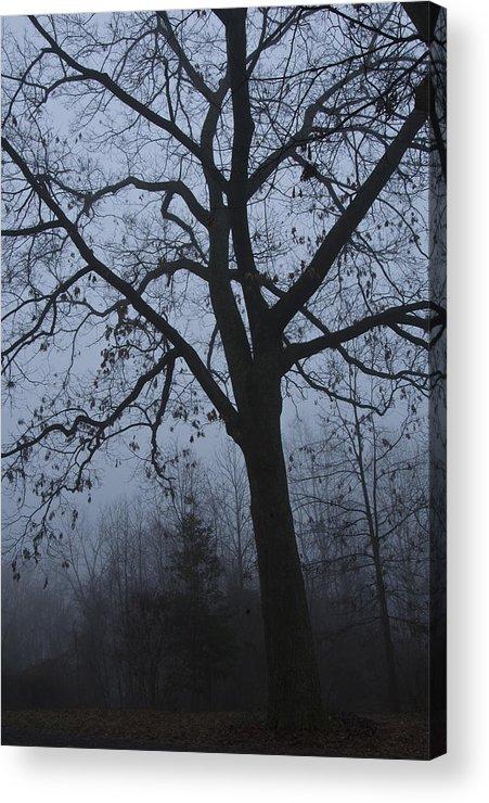 Oak Acrylic Print featuring the photograph Oak In The Fog by Eva Jo Wu