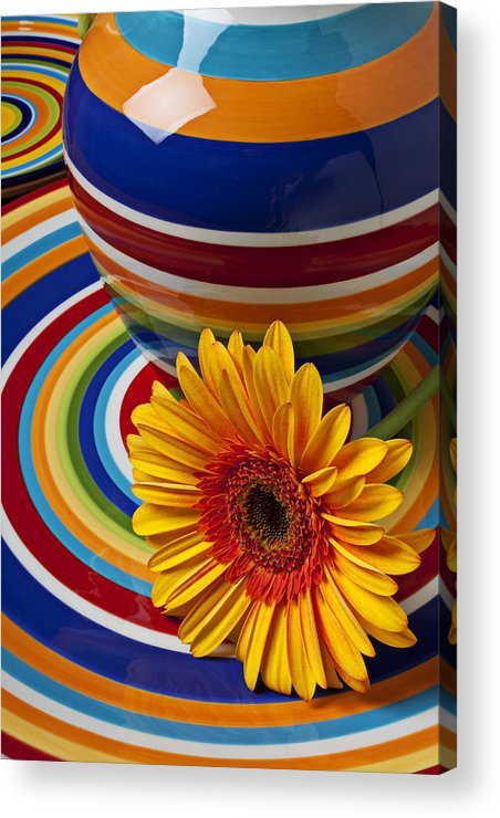 Yellow Acrylic Print featuring the photograph Orange Daisy With Plate And Vase by Garry Gay