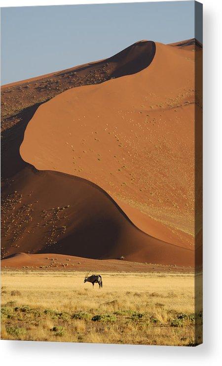 Gemsbok (oryx Gazella) Acrylic Print featuring the photograph Oryx II by Christian Heeb