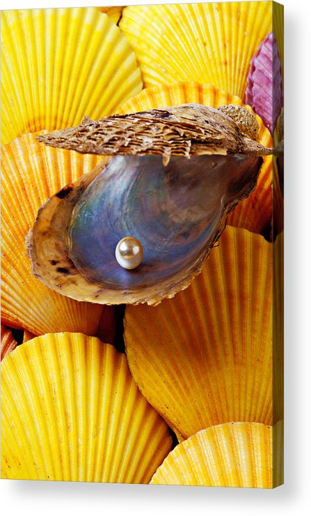 Pearl Acrylic Print featuring the photograph Pearl In Oyster Shell by Garry Gay