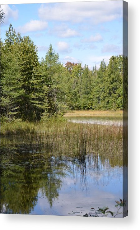 Ponds Acrylic Print featuring the photograph Pintail Pond by Jennifer King