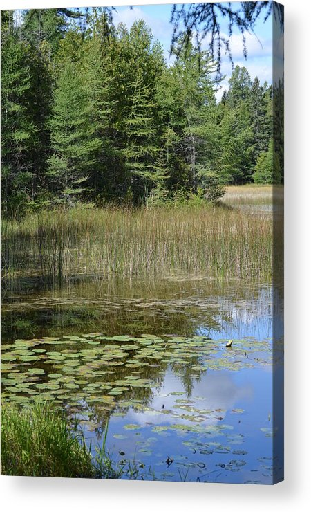 Scenic Acrylic Print featuring the photograph Pintail Pond4 by Jennifer King