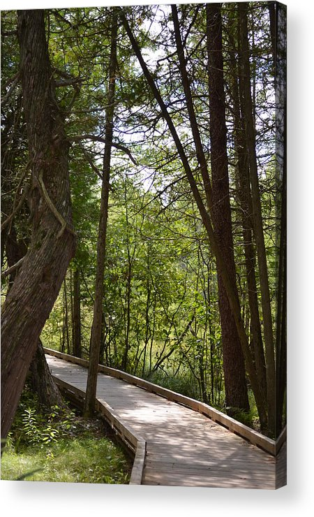 Trails Acrylic Print featuring the photograph Pintail Trail1 by Jennifer King
