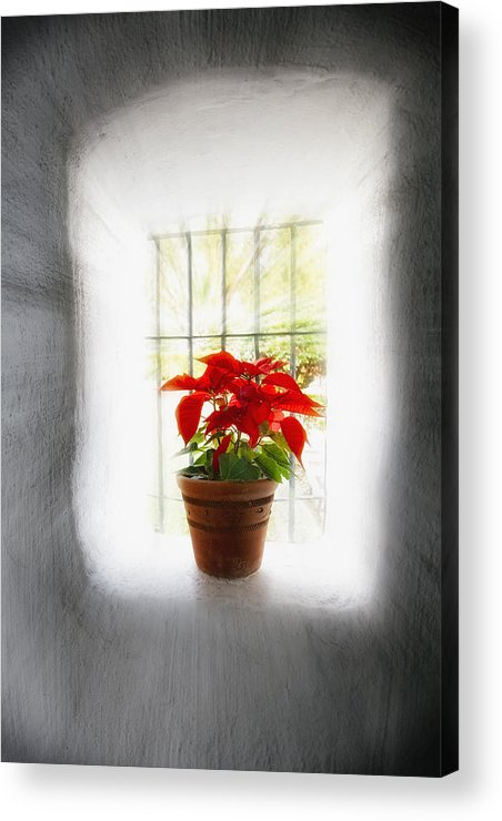 Adobe Acrylic Print featuring the photograph Poinsettia In Window Light by George Oze