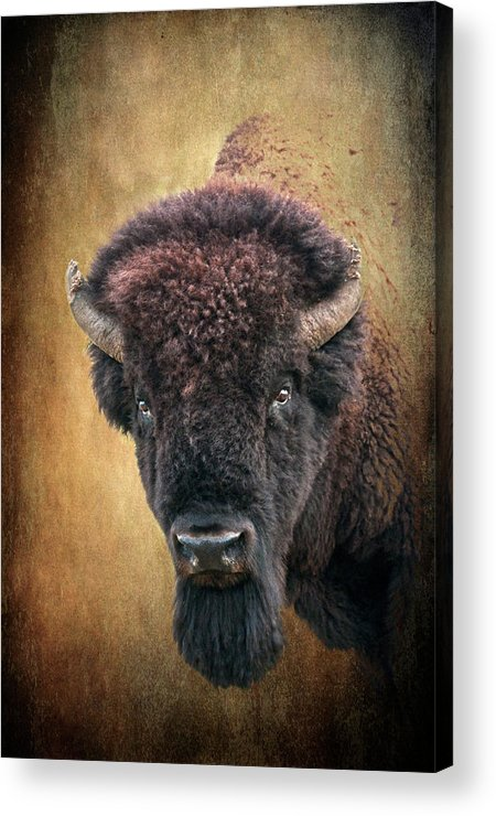 Bison Acrylic Print featuring the photograph Portrait Of A Buffalo by Tamyra Ayles