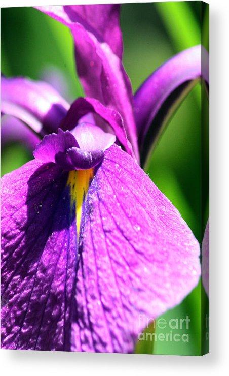 Purple Acrylic Print featuring the photograph Purple Vision by Lauren Nicholson