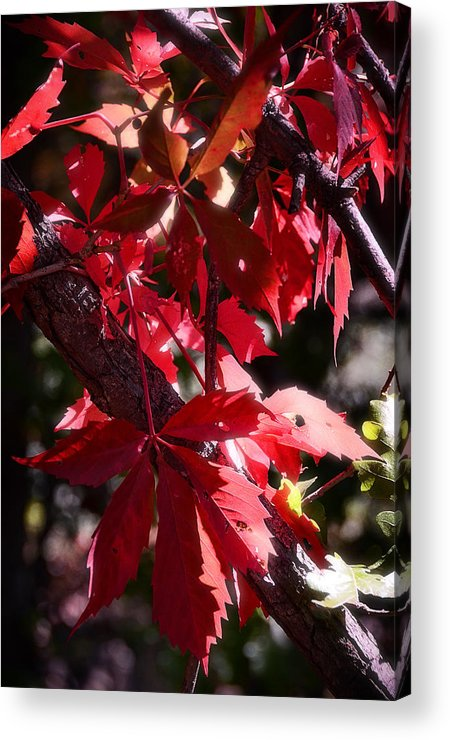 Red Acrylic Print featuring the photograph RED by Saija Lehtonen