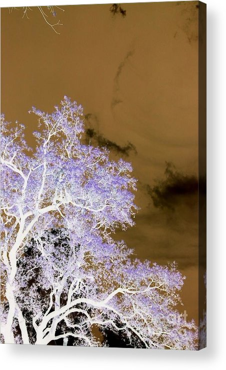 Trees Acrylic Print featuring the photograph Reverse by LDPhotography Stephanie Armstrong