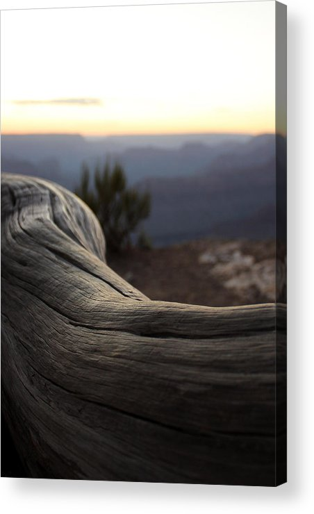 Roots Acrylic Print featuring the photograph Roots Of The Grand Canyon by Cedric Darrigrand